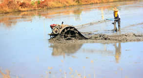 Farmer plowing rice fields Stock Images