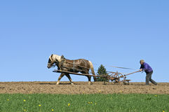Farmer Plowing With Horse And Plow, Germany Stock Photography