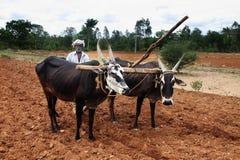 Farmer plows the fields. India,Dharmapuri Royalty Free Stock Photos