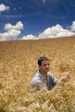 farmer pola pszenicy Obrazy Royalty Free