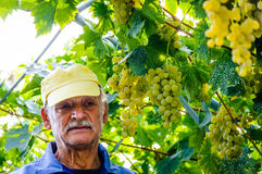 Farmer portrait vineyard mad problems sad Royalty Free Stock Images