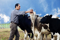 Farmer. Posing with cute cow Stock Photography