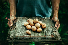 Farmer with potatoes Stock Photo
