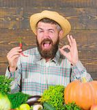 Farmer presenting hot chilli pepper wooden background. Pepper harvest concept. Rustic farmer in straw hat likes spicy stock photo