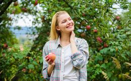 Farmer pretty blonde with appetite red apple. Harvesting season concept. Woman hold apple garden background. Farm. Produce organic natural product. Girl rustic royalty free stock photo