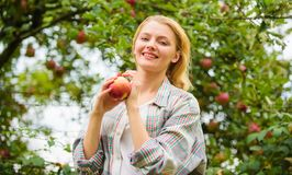 Farmer pretty blonde with appetite red apple. Local crops concept. Woman hold apple garden background. Farm produce royalty free stock photos