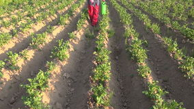 Farmer with protective equipment spraying potato field stock video