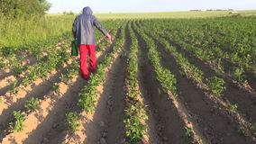 Farmer with protective equipment spraying potato field stock video footage