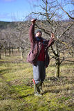 Farmer pruning apple tree Royalty Free Stock Photos