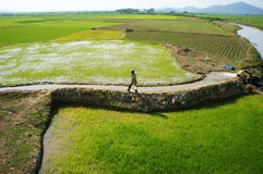 Farmer pump water to paddy field Royalty Free Stock Image
