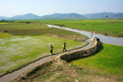 Farmer pump water to vast rice field Royalty Free Stock Images