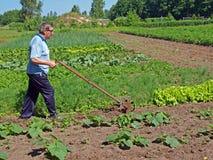 Farmer pushing tiller Royalty Free Stock Photos