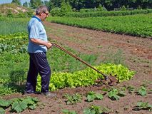 Farmer pushing tiller 3 Royalty Free Stock Photo