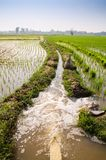 Farmer put water to the paddy. Farmmer put water to the paddy in rain season Royalty Free Stock Images