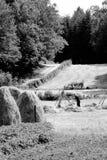 Farmer puts up hay on long drying racks. Royalty Free Stock Image