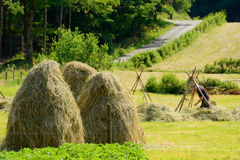 Farmer puts up hay on long drying racks. Stock Images