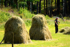 Farmer puts up hay on long drying racks. Stock Photo