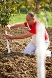 Industrial agriculture theme,farmer protects trees with knitted Royalty Free Stock Photo
