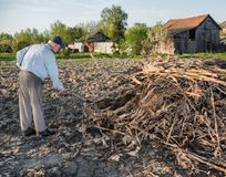 Farmer raking dried branches. Spring time royalty free stock images