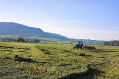 Farmer raking hay in field. Farmer on tractor raking up the mown hay in Southern Queensland, Australia in golden early morning light stock photos