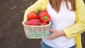 Farmer red girl neck picks pepper in a basket harvesting in a garden on soil. agriculture business concept. smart