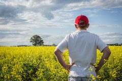 Farmer in red hat examining his yellow canola field Royalty Free Stock Image