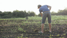 Farmer removes weeds by hoe in corn field with young growth at organic eco farm. Farmer in hat removes weeds by hoe in corn field with young growth at organic Stock Images