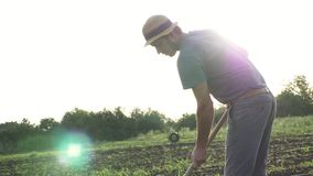 Farmer removes weeds by hoe in corn field with young growth at organick eco farm stock video footage