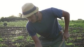 Farmer removes weeds by hoe in corn field with young growth at organick eco farm stock video