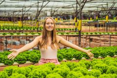 Farmer researching plant in hydroponic salad farm. Agriculture a. Nd scientist concept stock photo