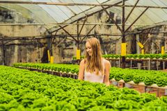 Farmer researching plant in hydroponic salad farm. Agriculture and scientist concept.  royalty free stock photos