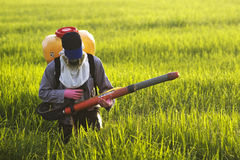 Farmer at rice field. A worker getting ready to fertilize the rice field royalty free stock photo