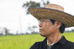 Farmer in the rice field. Close-up of Farmer face in the rice field Stock Photo