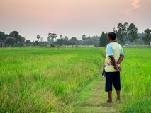 Farmer at the rice field. S Stock Photo
