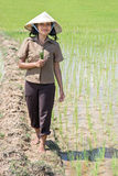 Farmer in the rice field. Young Asian farmer in the rice field Stock Photography