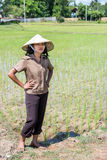 Farmer in the rice field. Young Asian farmer in the rice field Stock Image