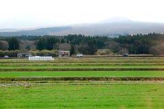 Farmer rice in Japan Stock Photo