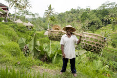 Farmer in rice paddy, Bali Royalty Free Stock Photos