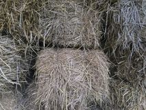 Farmer rice straw or haystack for animal feed. stock photo