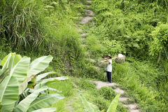 Farmer in rice terraces, Bali Stock Photography