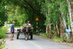 Farmer riding buffalo cart on country road Royalty Free Stock Image