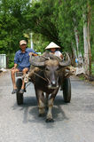Farmer riding buffalo cart on country road Stock Image