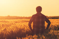 Farmer in ripe wheat field planning harvest activity. Female agronomist looking at sunset on the horizon Stock Photo