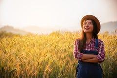 Farmer in ripe wheat field planning harvest activity stock image
