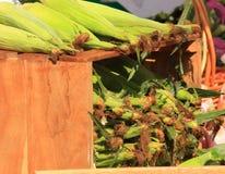 farmer rynku kukurydzy Zdjęcia Stock
