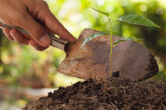 Farmer's hand holding shovel  young plant Stock Image