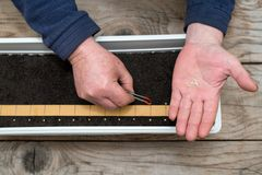 Farmer`s  hand holding tweezers precisely planting seeds for pepper seedlings. Selective focus Stock Images
