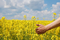 Farmer's hand over harvest of this year Stock Photo