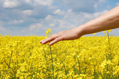 Farmer's hand over harvest of this year Royalty Free Stock Image