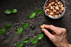 Farmer`s hand planting a seed royalty free stock images